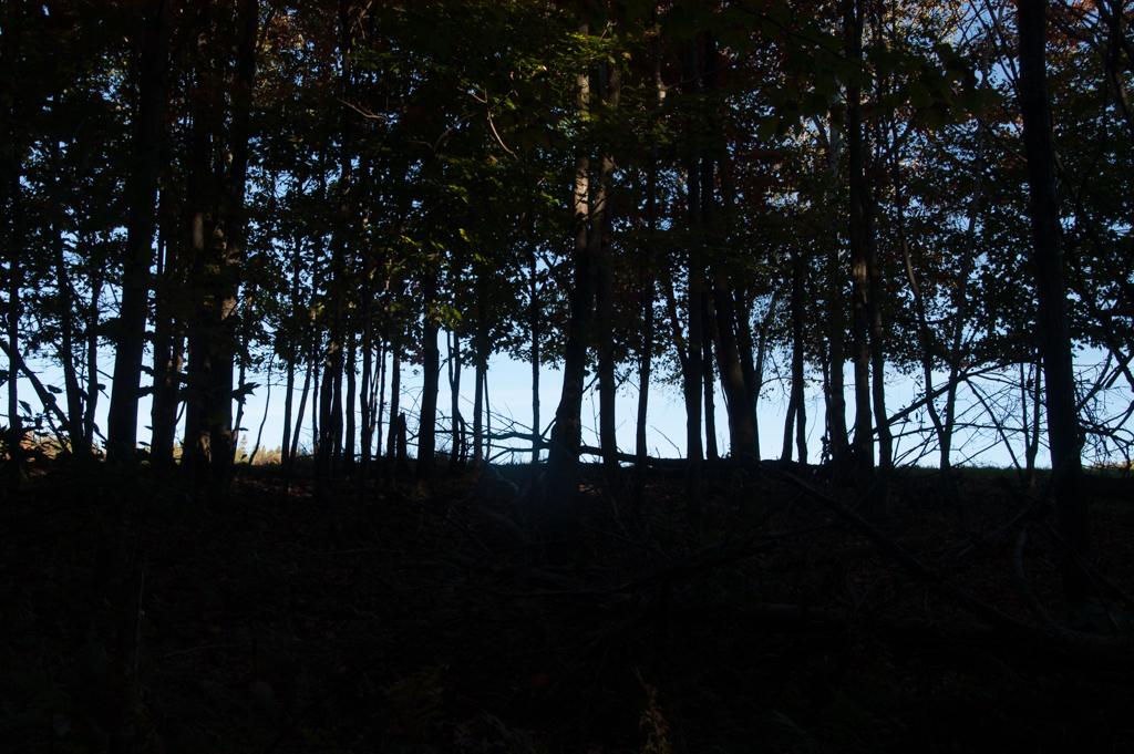 dark woods_