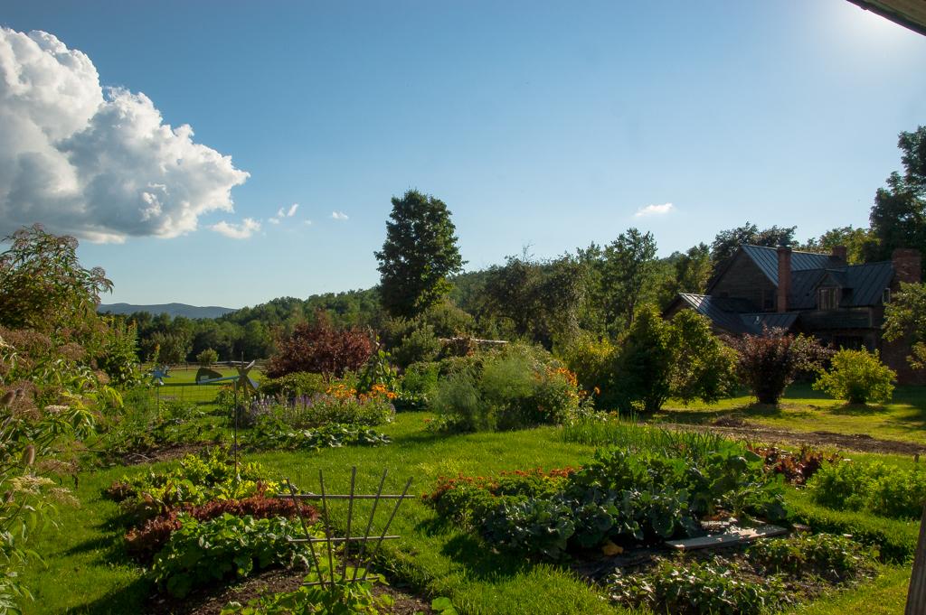 veg garden_